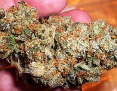 Buy Blueberry Hashplant Marijuana