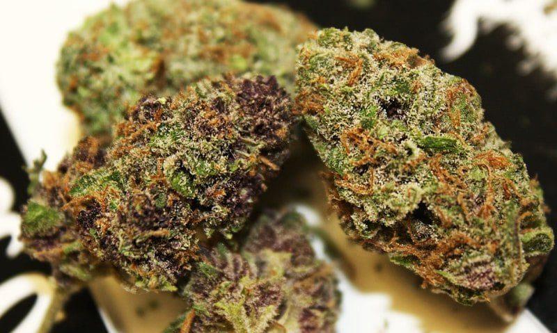 Buy Cannalope Kush Marijuana Online