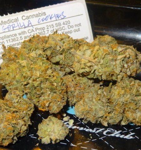 Buy Gorilla Biscuit Marijuana Strain Online, gorilla biscuits strain