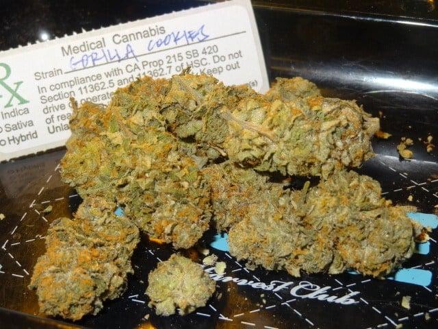 Buy Gorilla Biscuit Marijuana Strain Online