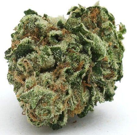 Buy Hustler Kush Marijuana Strain online
