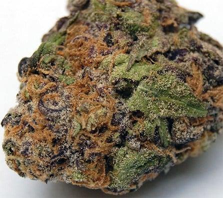 Buy Lavender Marijuana Strain Online