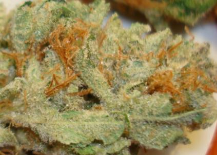 Buy Mickey Kush Marijuana Strain Online