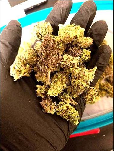 Buy Boax Bubblegum CBD hemp flower online